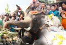 วังช้างอยุธยาแลเพนียด จัดเลี้ยงโต๊ะจีนช้าง วันช้างไทย